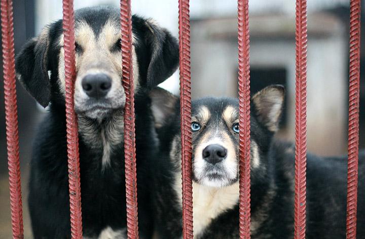 Zadbajmy o zwierzęta podczas fali upałów - apelują przedstawiciele kościerskiego schroniska dla zwierząt