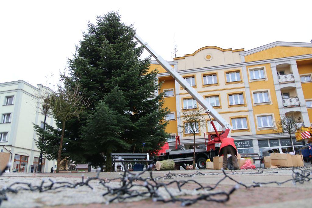Choinka na człuchowskim rynku. Drzewko ma 9 metrów wysokości
