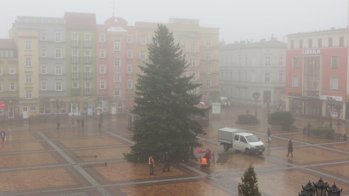 Choinka stanęła na Starym Rynku