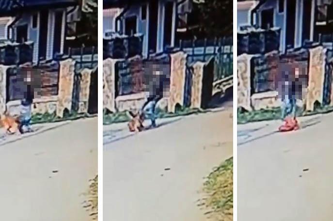Kościerska policja prowadzi postępowanie w sprawie mężczyzny, który znęcał się nad psem