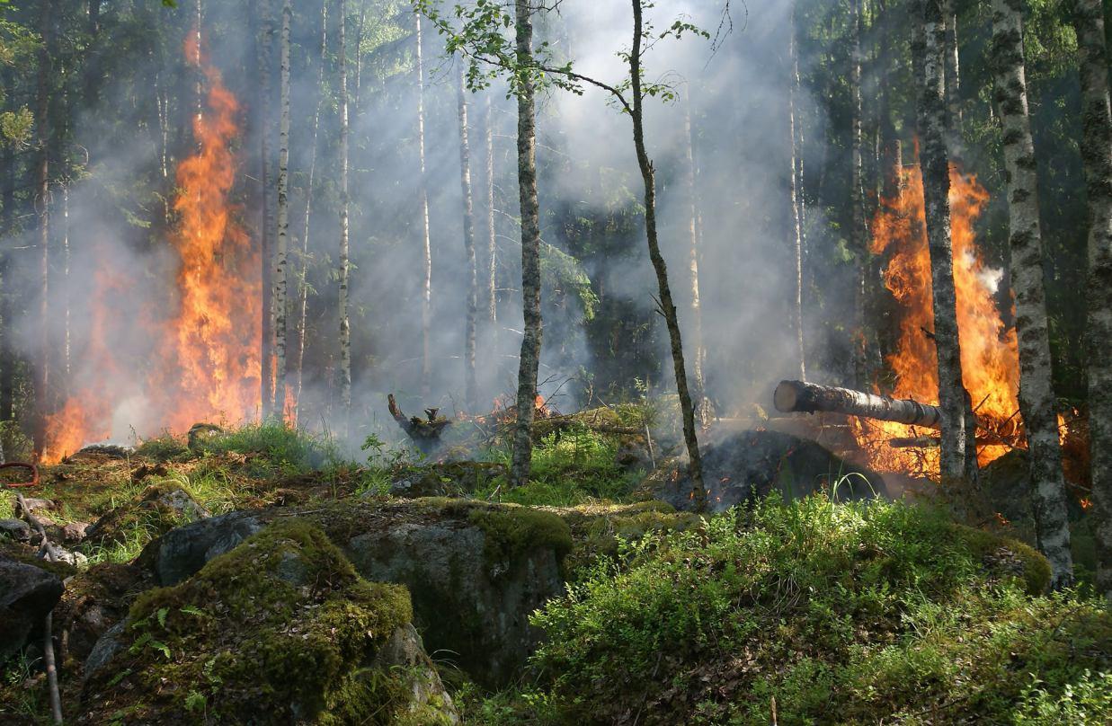 Susza i wysokie zagrożenie pożarowe w lasach regionu