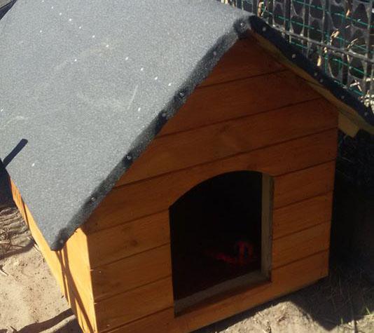 Sołtys Lichnów w gminie Chojnice nie oddaje do schroniska psów wałęsających się po wsi
