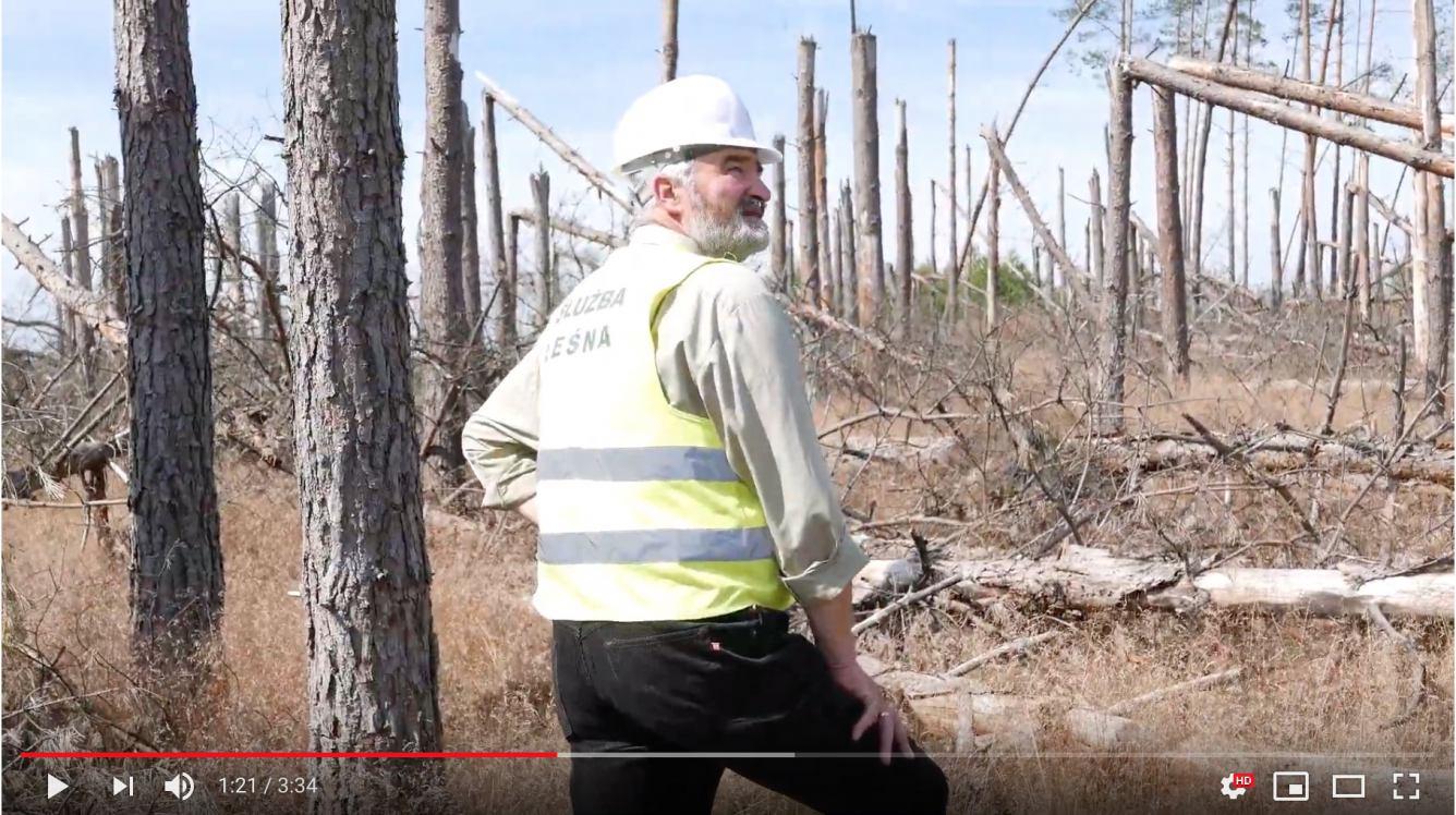 Szedłem i opłakiwałem mój las. W drugą rocznicę nawałnicy leśnicy nakręcili poruszający film