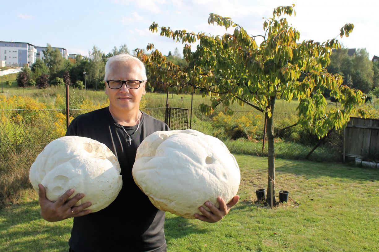 Mieszkaniec Chojnic znalazł grzyba - giganta