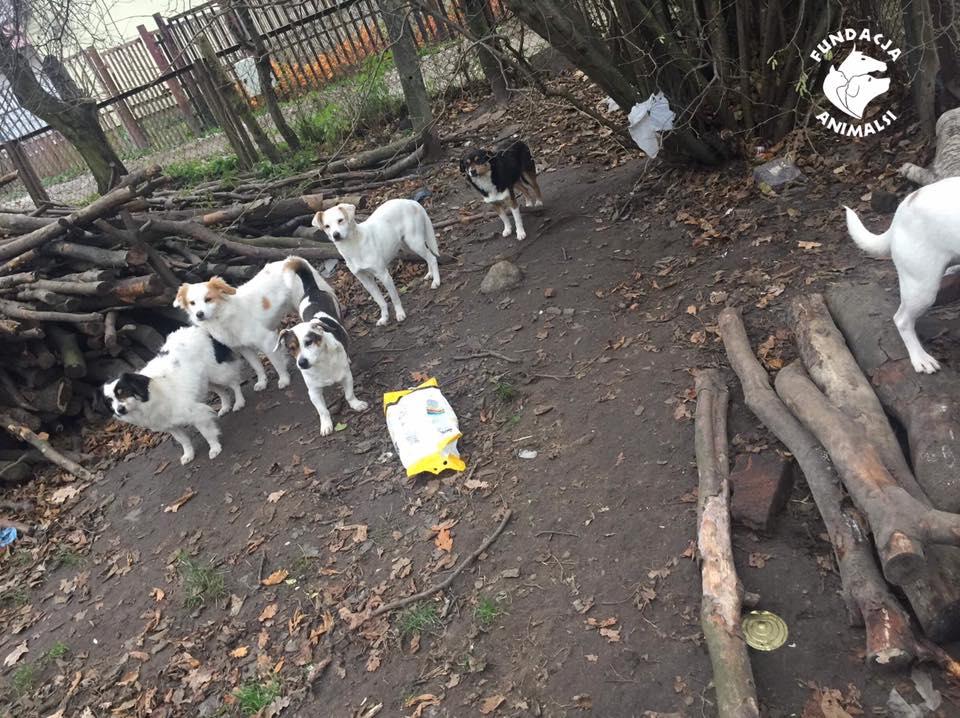 16 psów odebrali inspektorzy Animals podczas jednej z interwencji