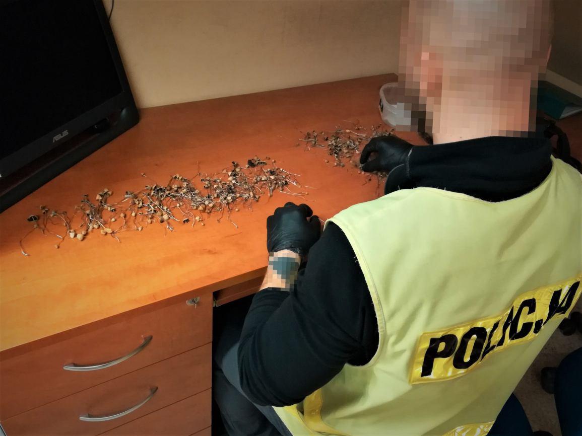 450 grzybów halucynogennych i 100 gramów narkotyków w mieszkaniu mieszkańca Bytowa