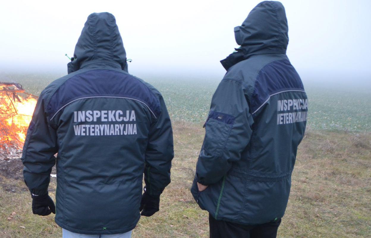 Padły dzik znaleziony na terenie gminy Koczała. Na szczęście zwierzę nie było zarażone wirusem ASF