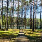 ZOSTAŃ W DOMU:  | Chcesz iść na spacer do lasu? Od piątku to zabronione. Powód? Koronawirus (AKTUALIZACJA)