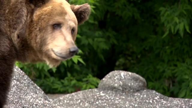 Zarzuty dla 23-latka, który podtapiał niedźwiedzicę w warszawskim zoo