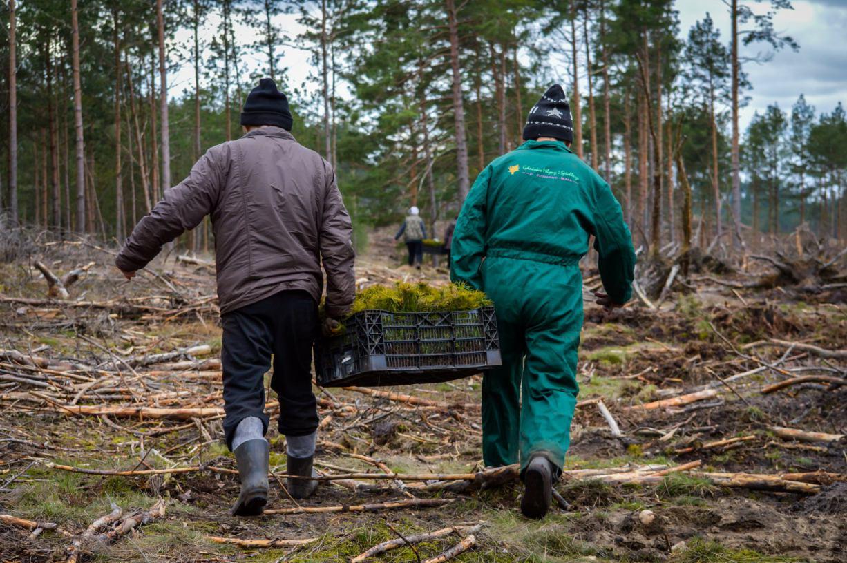 Nadleśnictwo Lipusz podsumowuje wiosenną akcję związaną z uprzątaniem i sadzeniem drzew