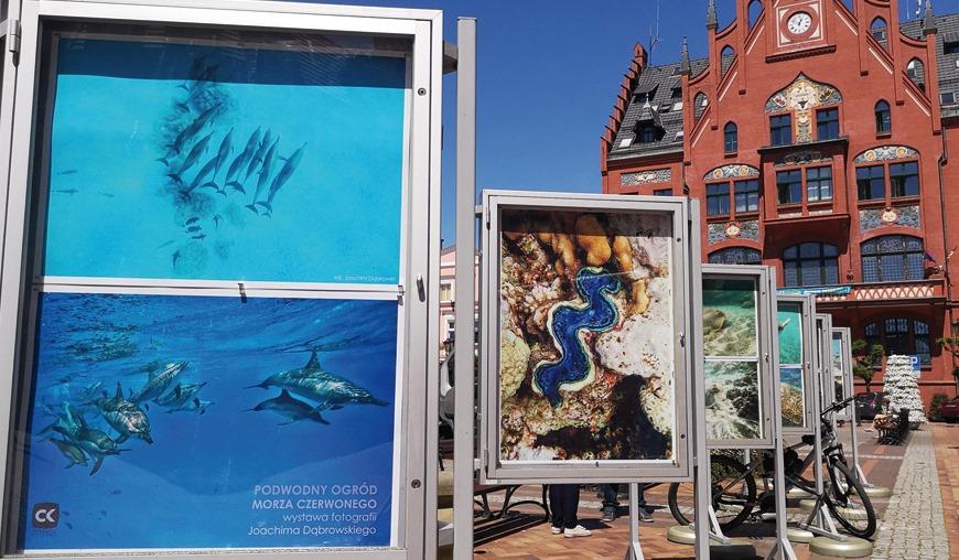 Podwodny ogród Morza Czerwonego w obiektywie Joachima Dąbrowskiego. Wystawa w centrum Chojnic rozmowa i foto