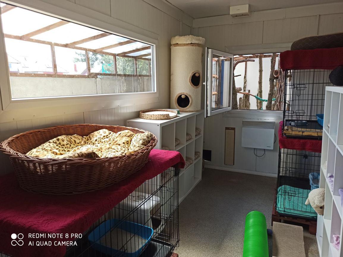 W Schronisku dla Zwierząt w Kościerzynie powstał specjalny szpital interwencyjny dla kotów