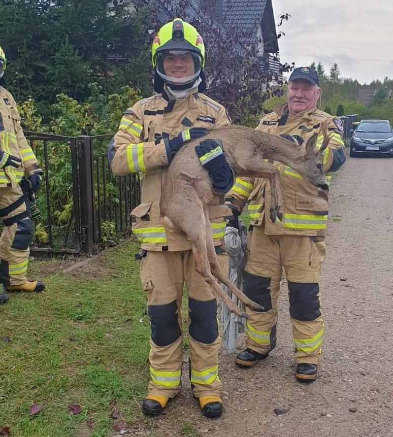 Strażacy z Charzyków uratowali uwięzioną w ogrodzeniu sarnę