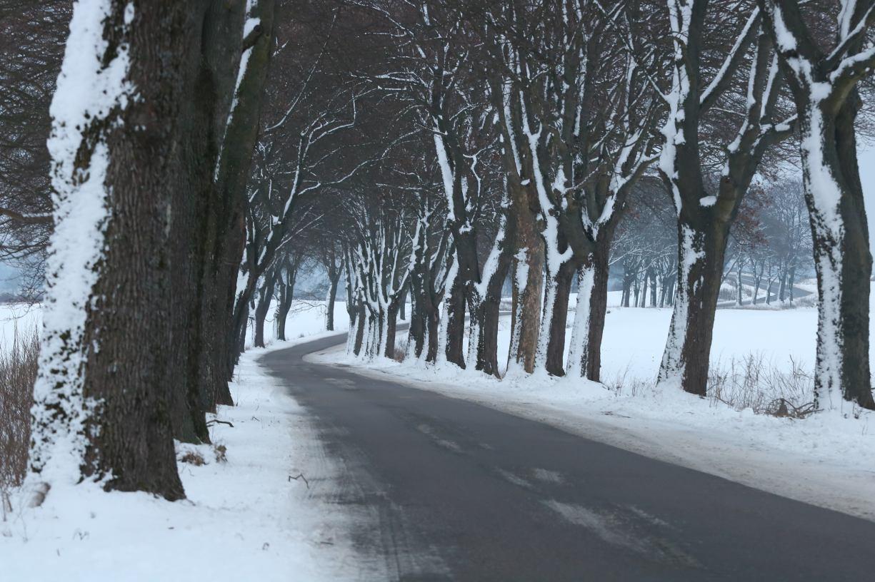 Powiat chce wyciąć 26 drzew przy drodze do Brzeźna w gminie Człuchów. Człuchowski Alarm dla Klimatu się sprzeciwia