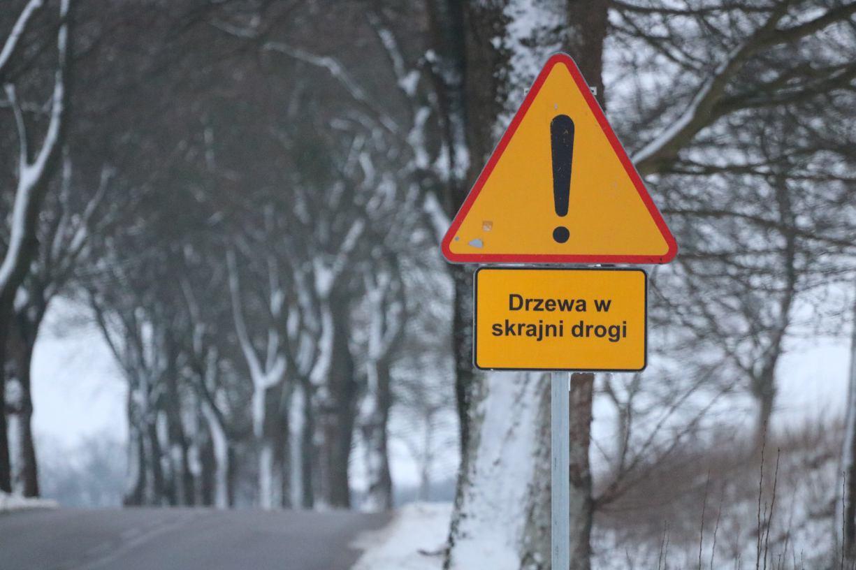 Nie 26, a maksymalnie 12 drzew może zostać wyciętych przy drodze do Brzeźna w gminie Człuchów