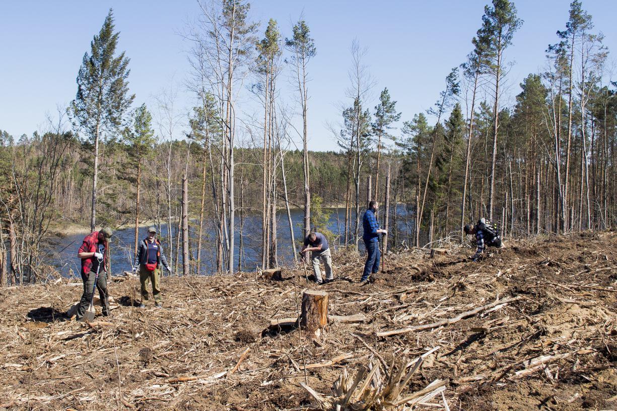Niemal cztery lata po przejściu nawałnicy w lasach naszego regionu nadal odbudowywany jest drzewostan ROZMOWA