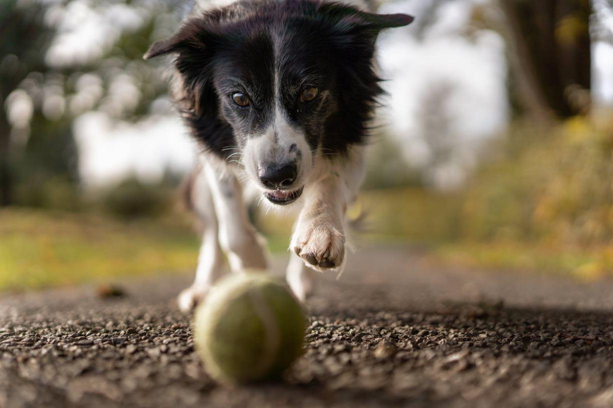 Nowe przepisy dotyczące wyprowadzania i sprawowania opieki nad psami. Jak przygotował się na nie Bytów? ROZMOWA
